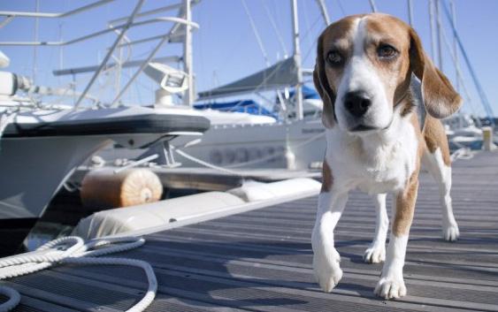 Alquilar un barco y llevar una mascota a bordo